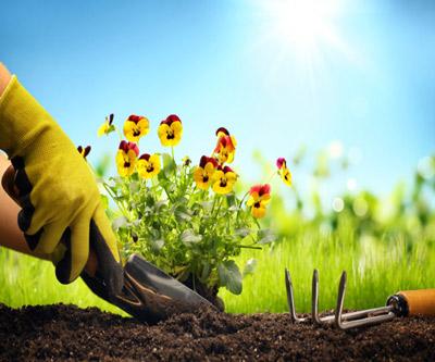 خدمات باغبانی منازل اصفهان